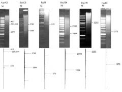 Сравнение теоретически рассчитанных диаграмм распределения фрагментов геномной ДНК и электрофореграмм